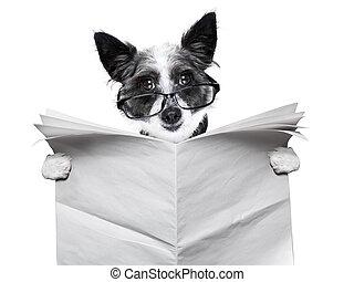 cão, jornal