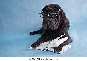cão, leitura