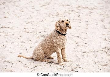 cão, ligado, um, praia