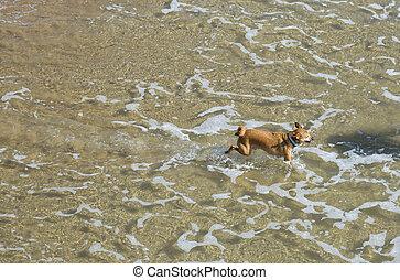 cão, mar
