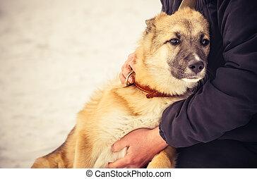 cão, pastor, filhote cachorro, e, mulher, abraçando, ao ar...