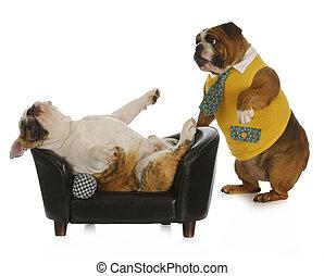 cão, psicologia