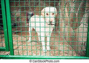 cão, rosto, barras, veterinário, clínica, nenhuma pessoas