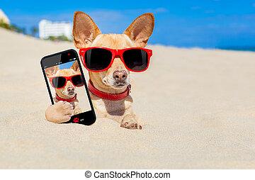 cão, selfie, enterrado, em, areia