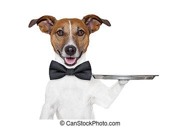 cão, serviço, bandeja