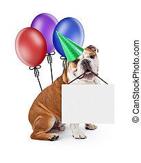 cão, sinal, aniversário, segurando, em branco, balões