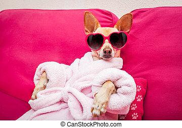cão, spa, wellness