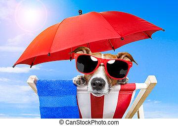 cão, sunbathing