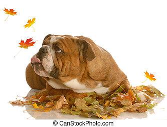 cão, tocando, em, folhas