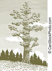 cèdre, géant, arbre, woodcut