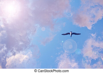 céleste, bleu clair, ciel, à, mouette