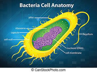 célula, bactérias, estrutura