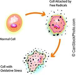célula, oxidative, tensão