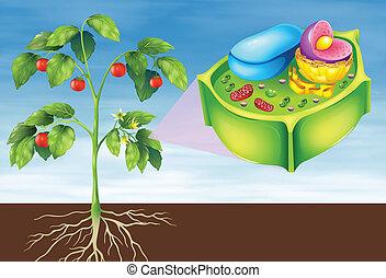 célula, planta