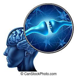 célula, receptor, nervio, humano, sinapsis