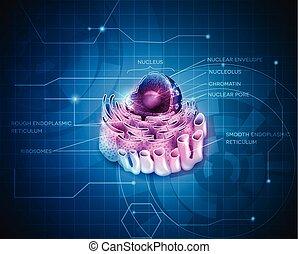 célula, reticulum, núcleo, endoplasmic