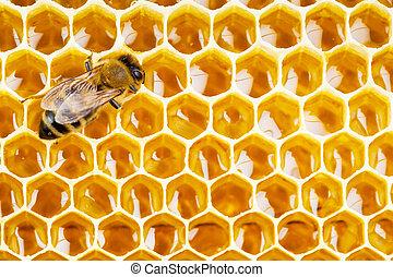 células, panal, trabajando, abeja