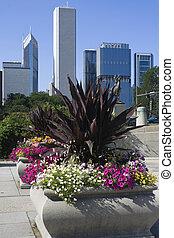 céntrico, flores, chicago