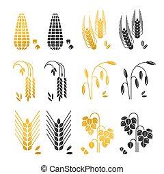 céréale, maïs, grains, or, blé, isolé, icons., seigle, vecteur, noir, orge, fond, riz, blanc