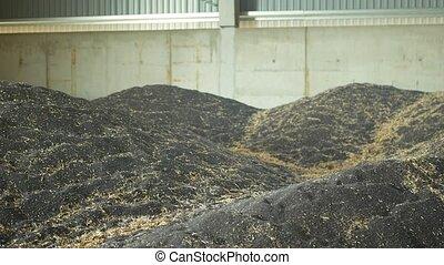 céréales, cachet, entrepôt, monticule, huile, graine, ...