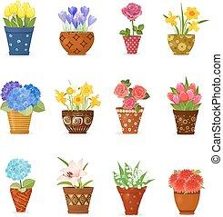 céramique, pots, collection, planté, conception, fleurs, ton