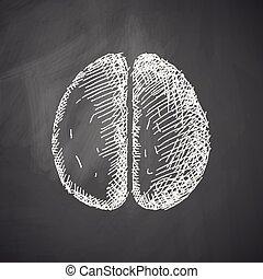 cérebro, ícone