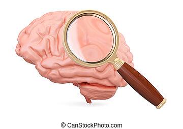 cérebro,  3D,  magnifier,  human, fazendo