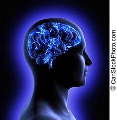 cérebro, atividade