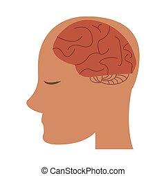 cérebro, cabeça, human