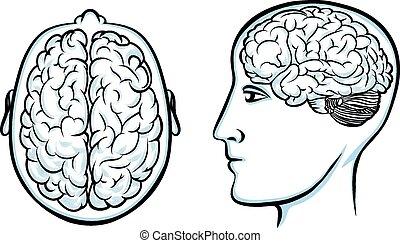 cérebro, cabeça, silueta, human
