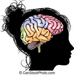 cérebro, mulher, conceito