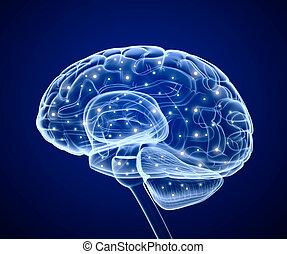 cérebro pensando, prosess., impulses.
