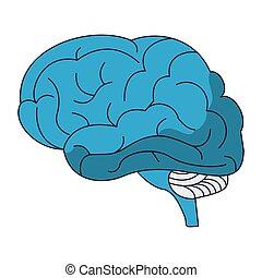 cérebro, símbolo, human