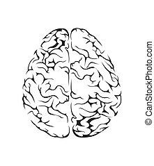 cérebro, símbolo, vetorial, ilustração