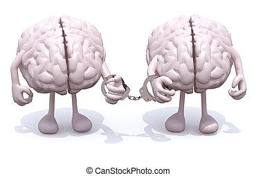 cérebros, algemas, dois, mão, braços, human, pernas, ligado