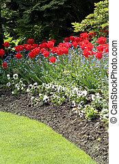 césped, y, tulipanes