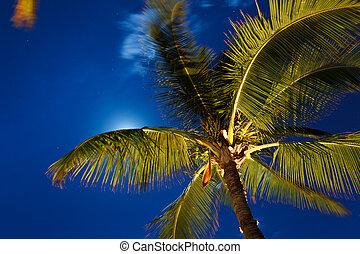 céu, árvores, lua, tropicais, noite palma