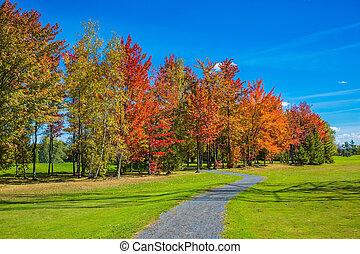 céu azul, árvores, multi-colorido