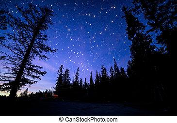 céu azul, com, muitos, twinkling, estrelas, em, floresta
