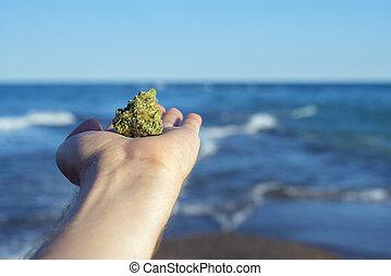 céu azul, contra, mão, cannabis, segurando, ondas, nug,...