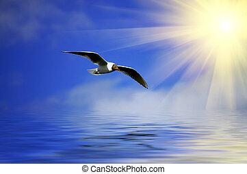 céu azul, flaying, prata, gaivota