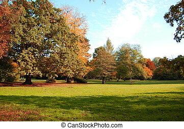 céu azul, sob, parque, árvores, verde, outono