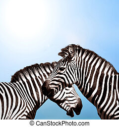 céu, dois, zebras