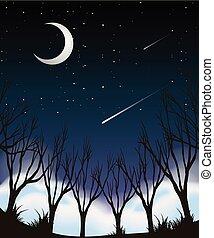 céu noite, cena, floresta