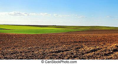 céu, nublado, campo, pôr do sol, ploughed, sob
