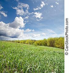 céu, nublado, madeira, verde, sob, capim
