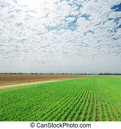 céu nublado, sobre, agricultura, campo verde