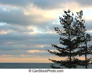 céu, pôr do sol, pinhos, mar