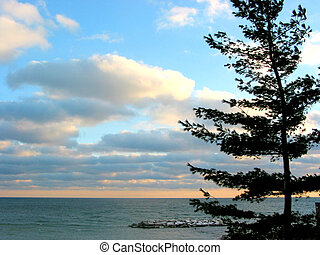 céu, pinho, pôr do sol, mar
