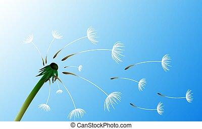 céu, vento, contra, dandelion